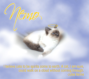 Nemo angel cat